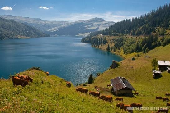 Kühe auf einer Almwiese am Lac de Roselend